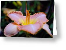 Day Lillie In Yellow And Pink Greeting Card