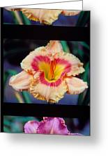Day Lilly 02 Greeting Card