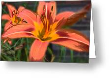 Day Lilly Greeting Card by David Armstrong