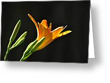 Day Lily 1 Greeting Card