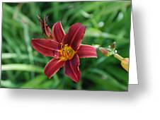 Day Lily 3648 Greeting Card