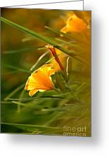 Day Lily Backlit Greeting Card