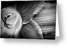Day Lily Detail - Black And White Greeting Card