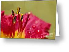 Day Lily Dew Greeting Card