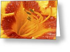 Day Lily In The Rain - 688 Greeting Card