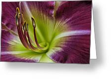 Day Lily Intimate Greeting Card