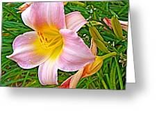 Day Lily Near Ottawa-ontario  Greeting Card