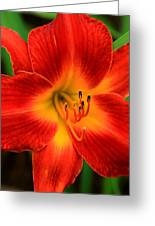 Day Lily1 Greeting Card