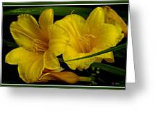 Day Of The Lilies  Greeting Card