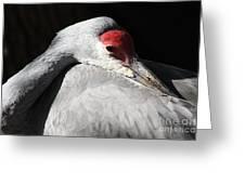 Daydreaming Sandhill Crane Greeting Card