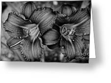 Daylilies Black And White Greeting Card