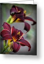 Daylilies Forever Greeting Card