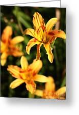 Daylillies0107 Greeting Card