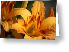 Daylillies0185 Greeting Card
