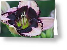Daylily 12 Greeting Card
