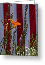 Daylily And Old Glory Greeting Card
