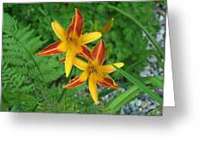 Frans Hall Daylily Attention Getter Greeting Card