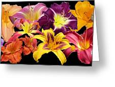 Daylily Banner Greeting Card