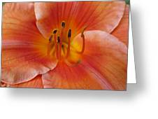 Daylily Bloom Greeting Card