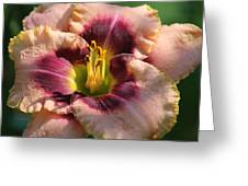 Daylily Collection # 14 Greeting Card