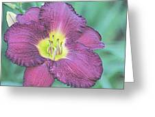 Daylily Collection #26 Greeting Card