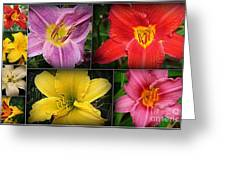 Daylily Days  Greeting Card