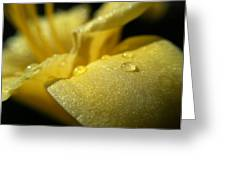 Daylily Dew Drops Greeting Card