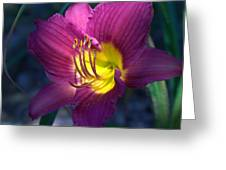 Daylily Greeting Card by Edward Hamilton