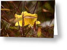 Daylily In Autumn Greeting Card