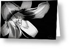 Daylily In Gray Greeting Card