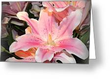Pink Daylily In Bloom Greeting Card