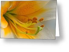 Gold Daylily Close-up Greeting Card