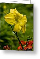 Daylily Picture 469 Greeting Card