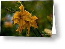Daylily Picture 474 Greeting Card