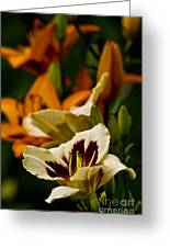 Daylily Picture 487 Greeting Card