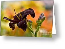 Daylily Picture 514 Greeting Card