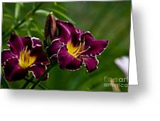 Daylily Picture 526 Greeting Card