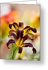 Daylily Picture 541 Greeting Card