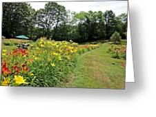 Daylily River Greeting Card