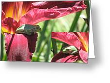 Daylily Shade For A Tree Frog Greeting Card