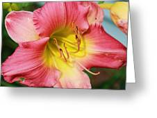 Daylily Greeting Card by Victoria Sheldon