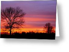 Day's End Elm Greeting Card