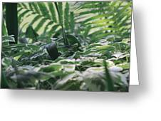 Dazzle Camouflage Patterns In The Garden Greeting Card