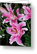 Dazzling Stargazers Greeting Card