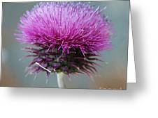 Dazzling Thistle Beauty Greeting Card