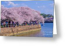 Dc Blossom Visitors Greeting Card