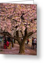 Dc Cherry Blossom Tree Greeting Card