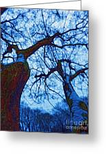 Dc Trees Map Greeting Card