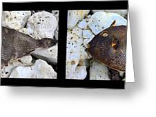 Dead Fish Lives 5a Greeting Card
