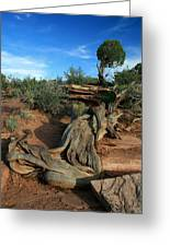 Dead Horse Point Tree 1 Greeting Card